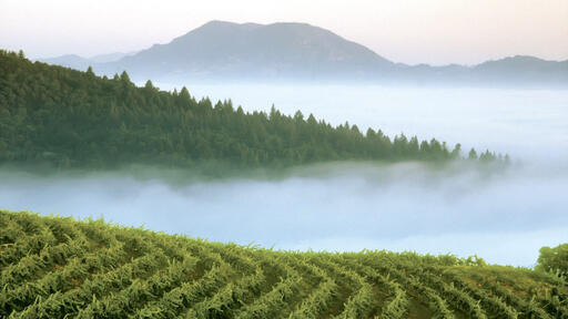 Smith-Madrone Vineyards & Winery Image