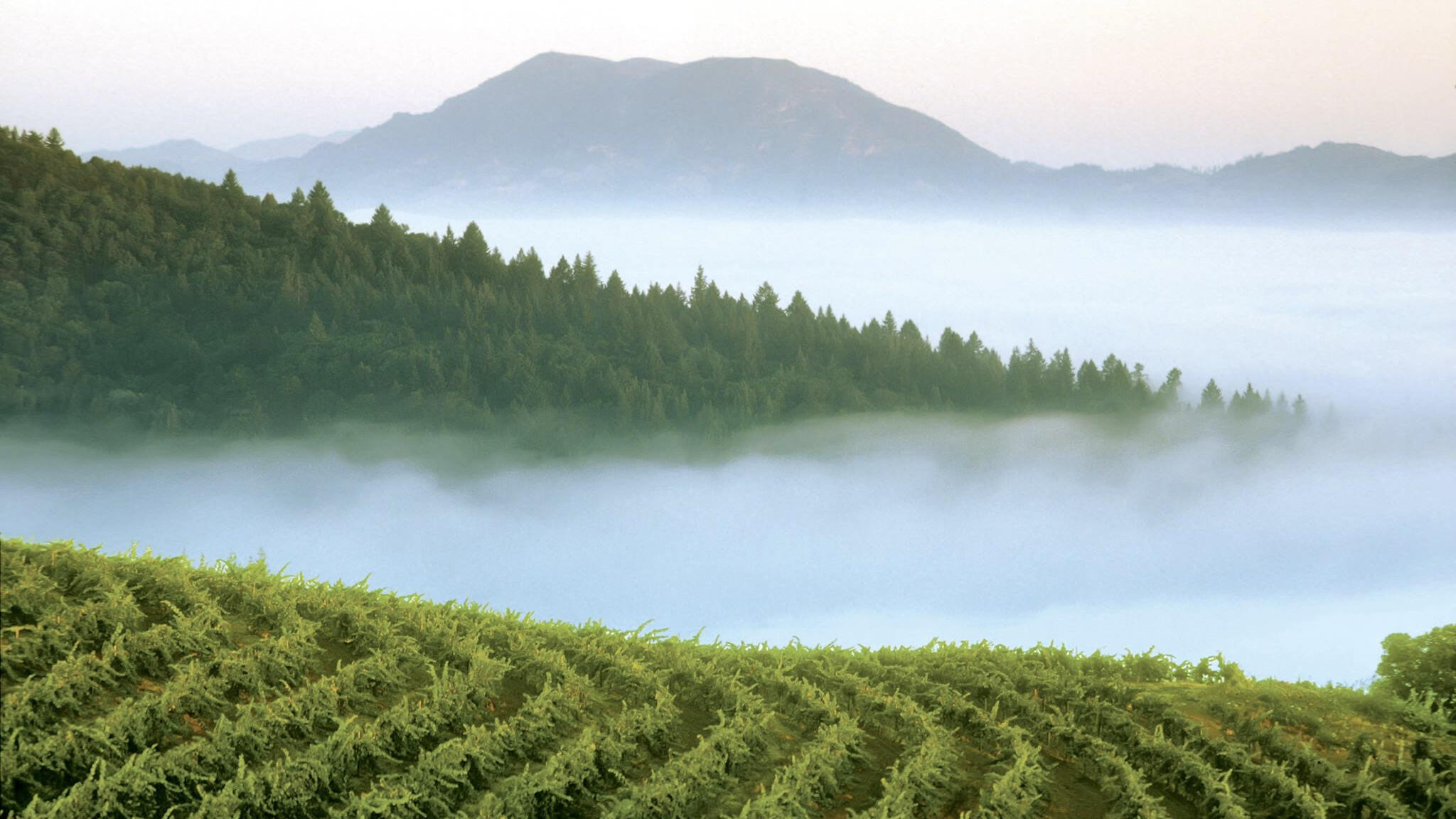 Smith-Madrone Vineyards & Winery Cover Image