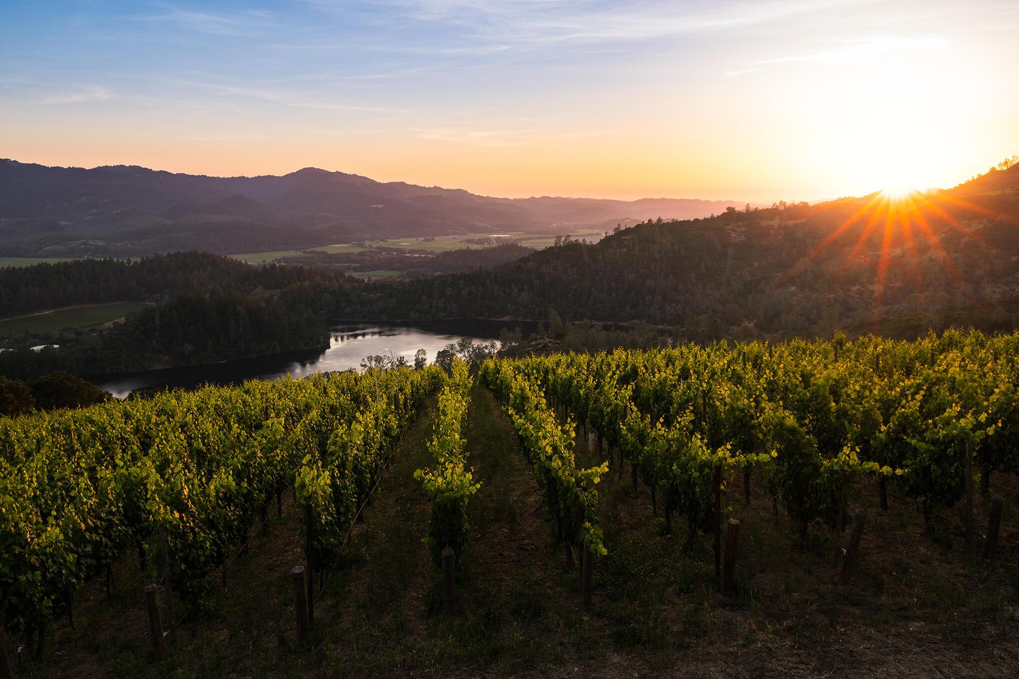 Viader Vineyards & Winery Cover Image