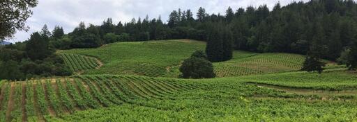 Storybook Mountain Vineyards Image