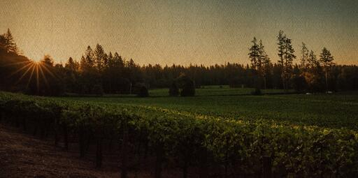 Fourth Leaf Wines Image