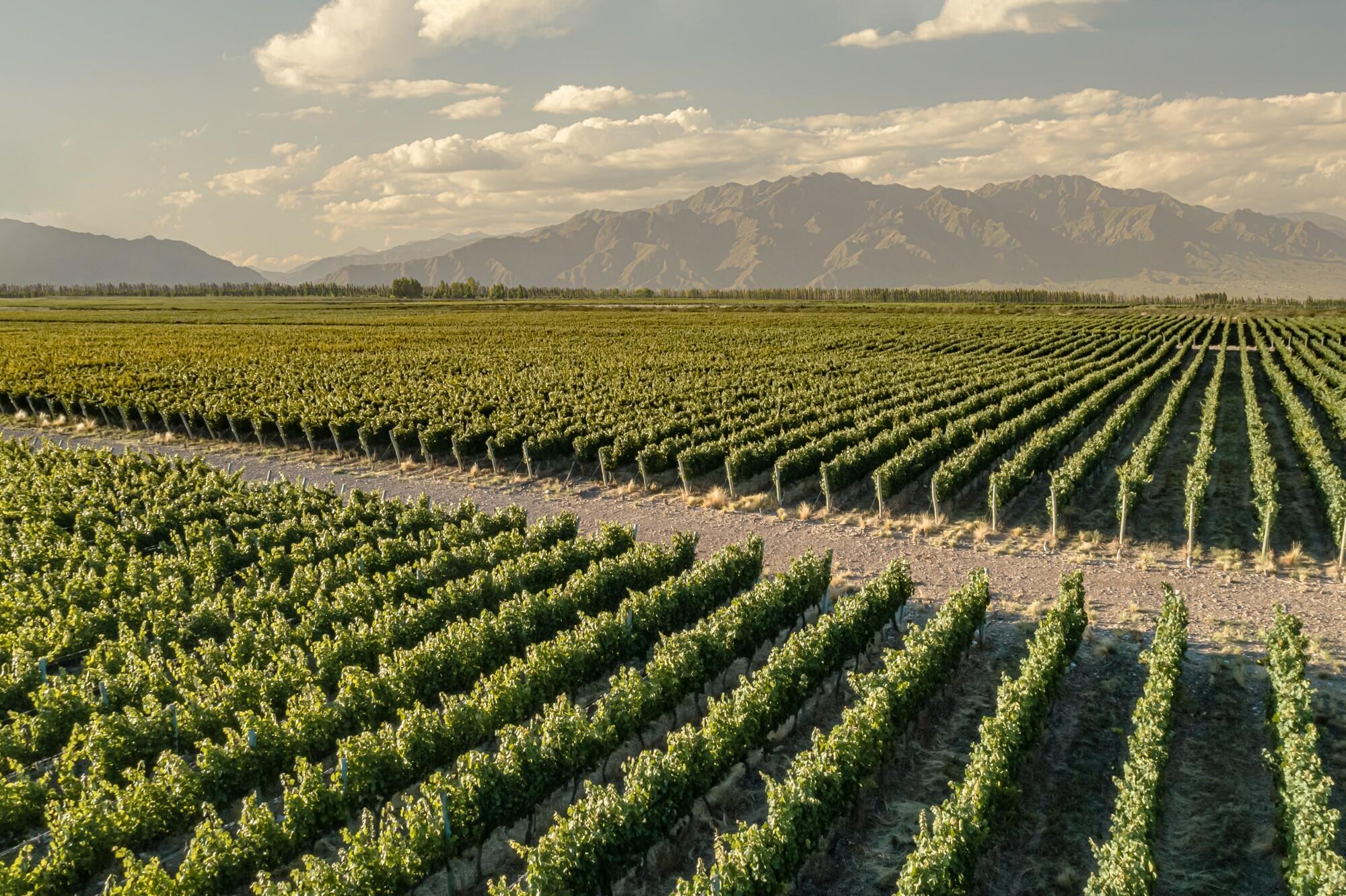 Cadus Wines Cover Image