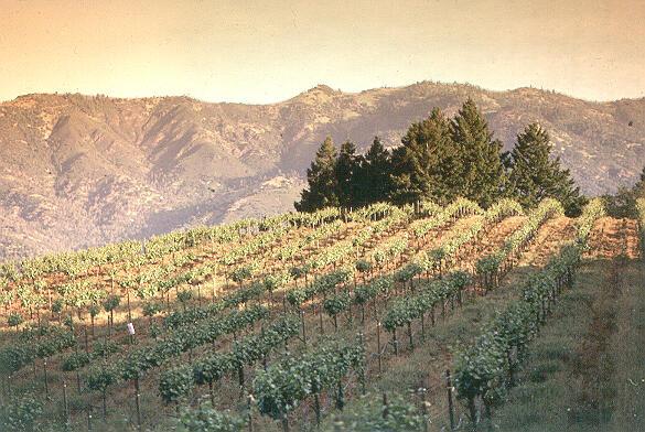 Schramsberg Vineyards Cover Image