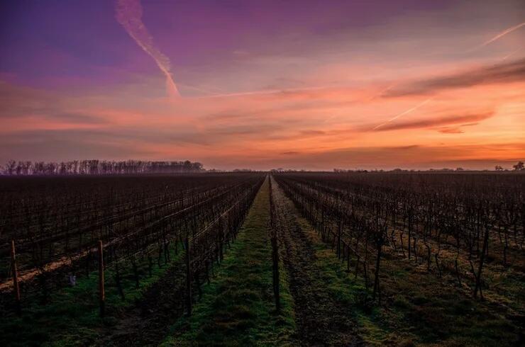 Los Rocosos Vineyards Cover Image