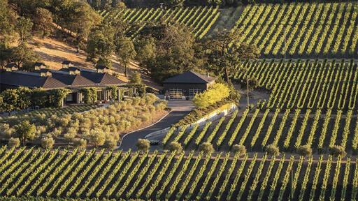 Cliff Lede Vineyards Image