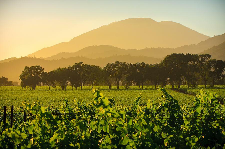Fortunati Vineyards Cover Image