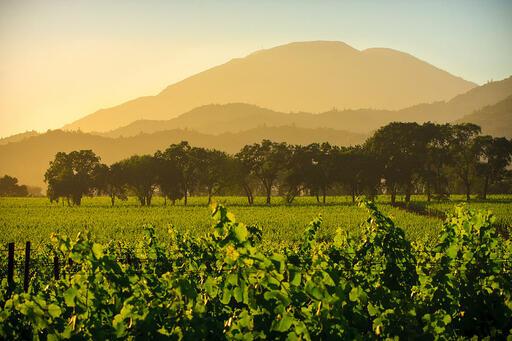 Fortunati Vineyards Image