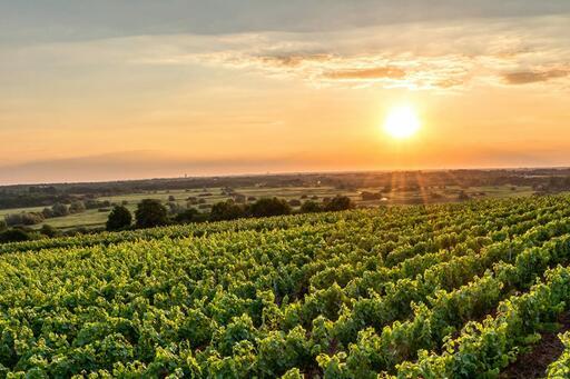 Axios Wine Image