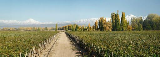 Martino Wines Image