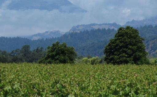 Emerson Brown Wines Image