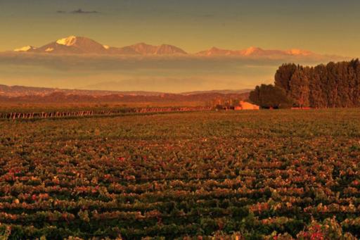 Alchimia Wines Image