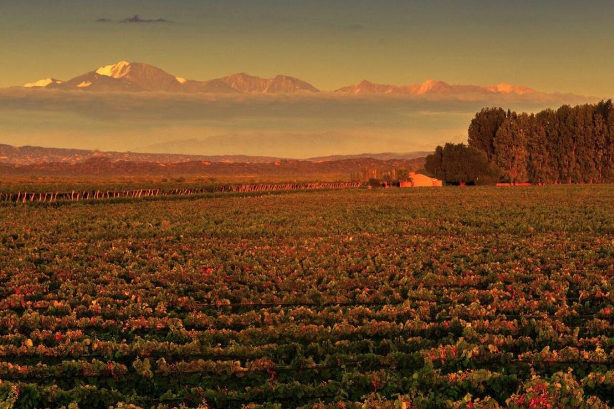 Alchimia Wines Cover Image