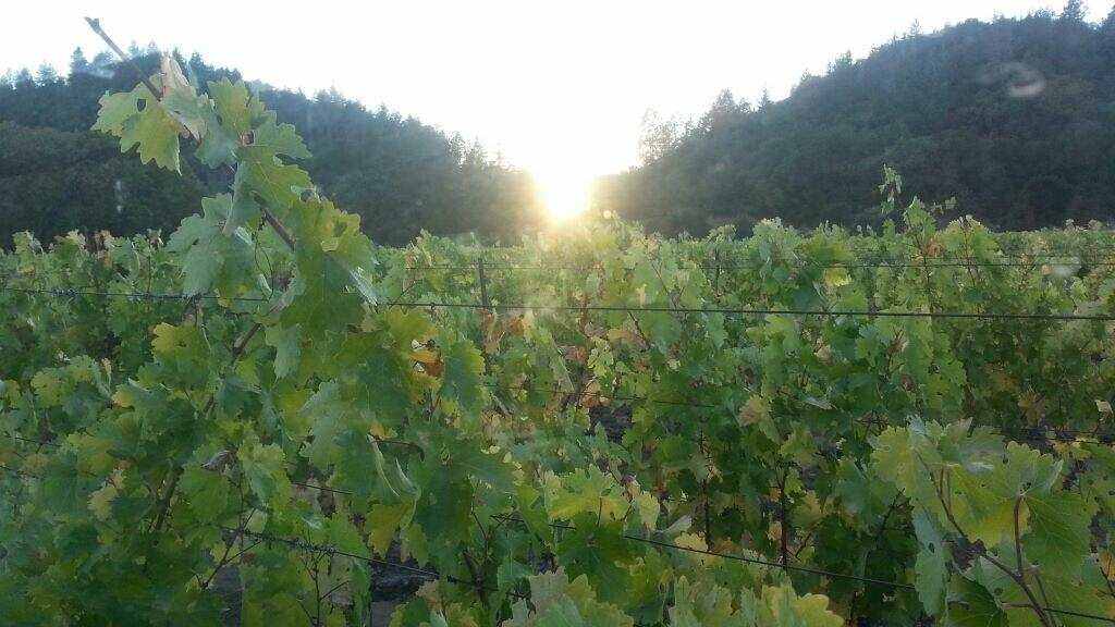 Barlow Vineyards Cover Image