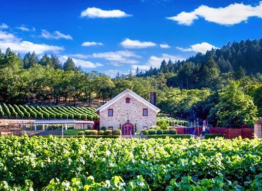 Morlet Family Vineyards Cover Image