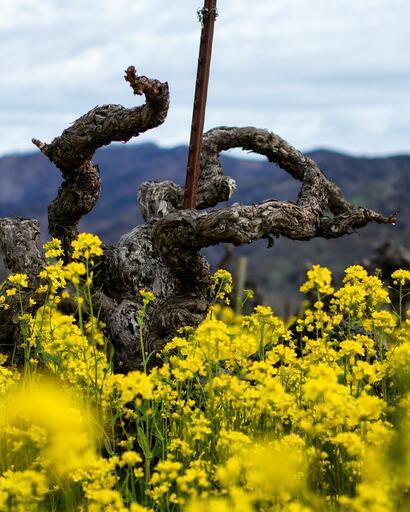 Vermeil Wines Image