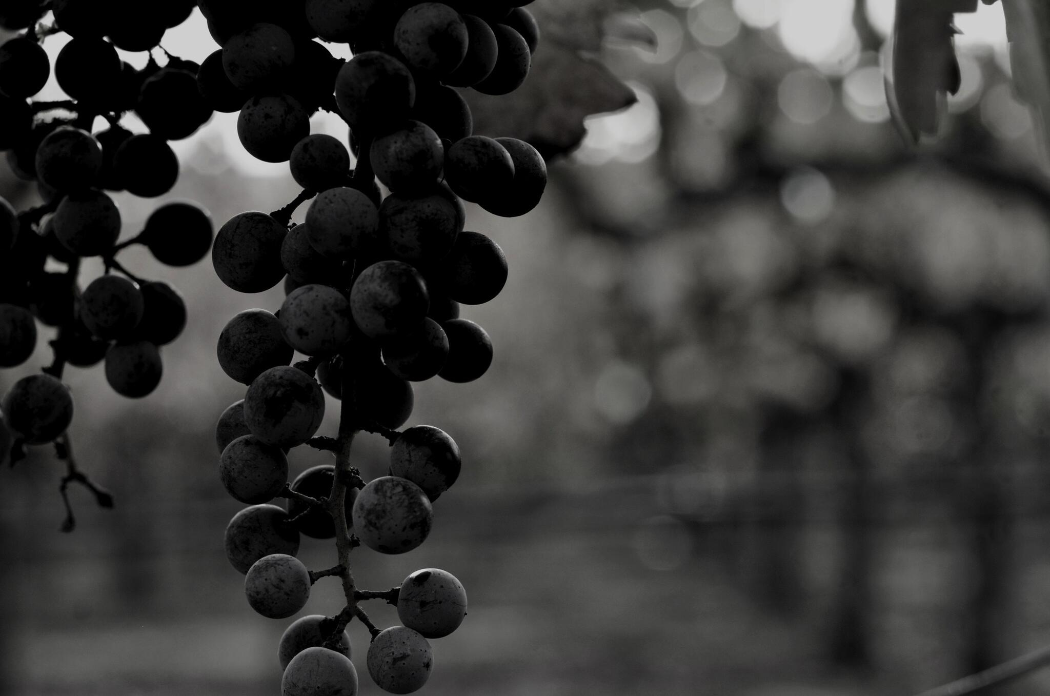 Night Wines Cover Image