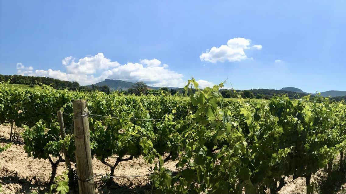 AvinoDos Wines Cover Image