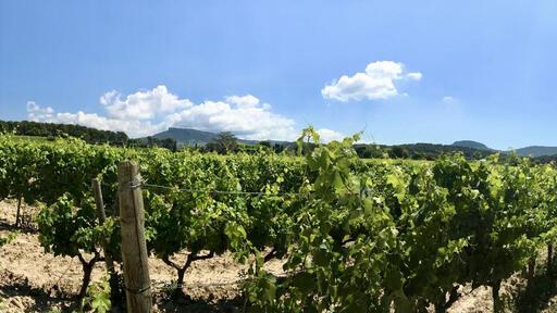 AvinoDos Wines Image
