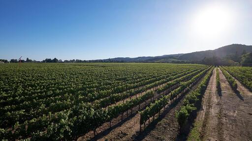 Silenus Winery Image