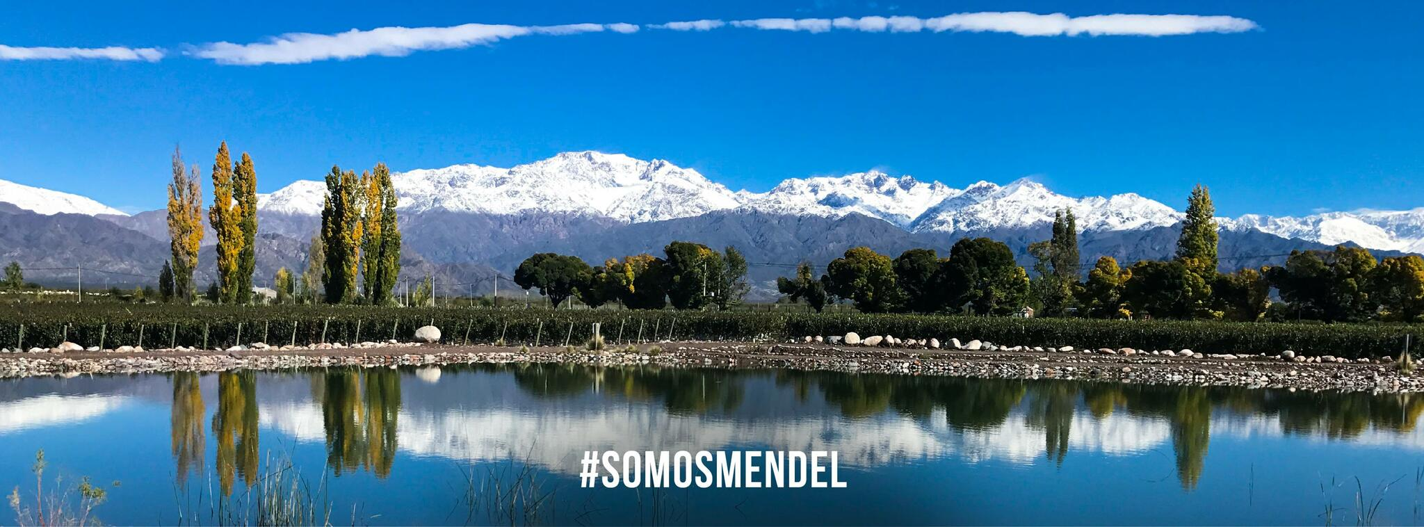 Mendel Wines Cover Image