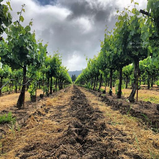 hope & grace Winery Image