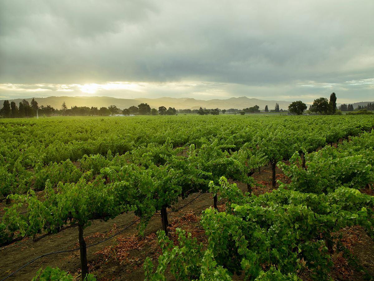 Bella Union Winery Cover Image