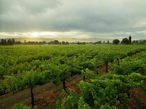 Bella Union Winery Image