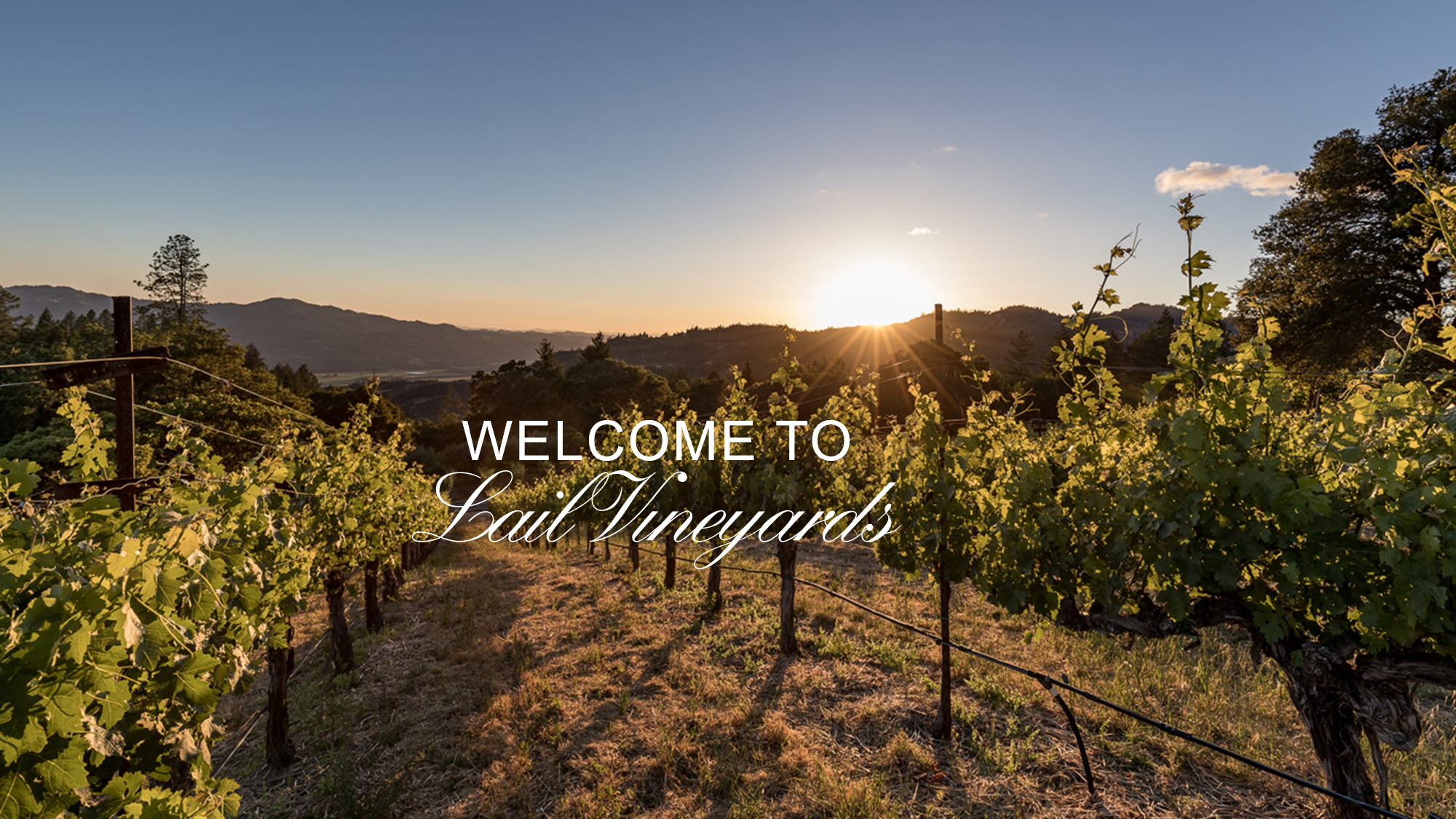 Lail Vineyards Cover Image