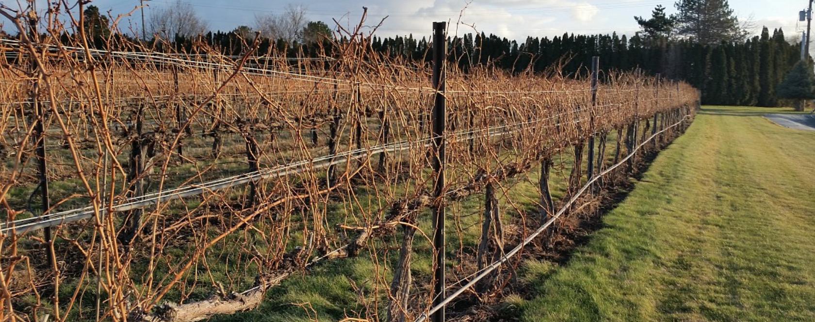 Mackey Vineyards Cover Image
