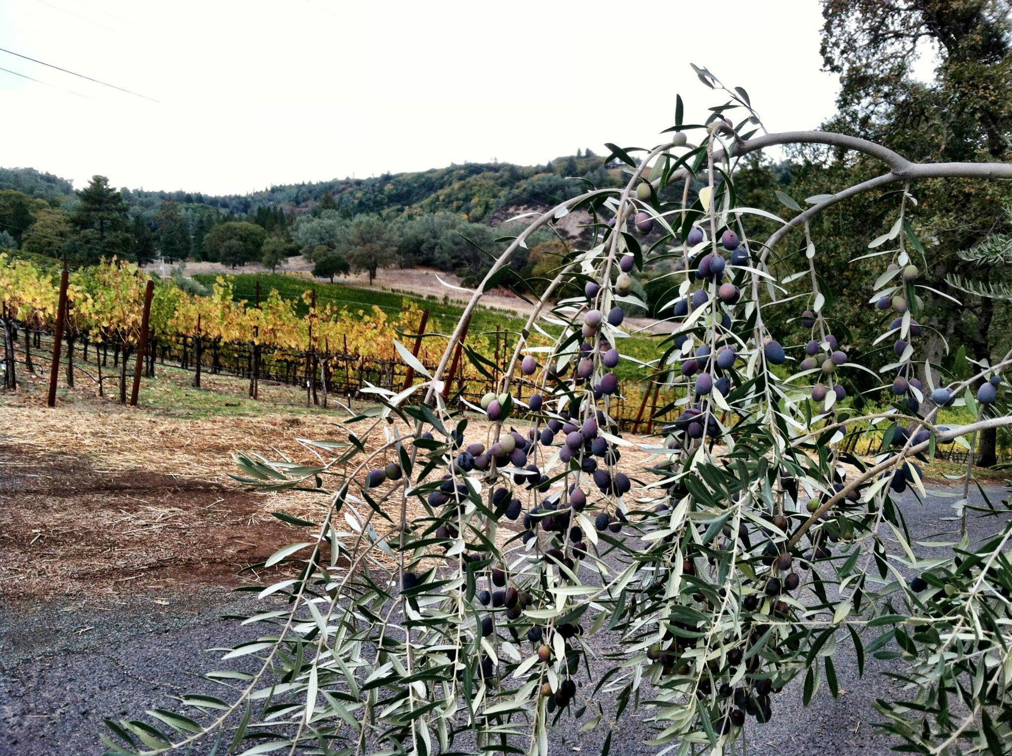 Cimarossa Wines Cover Image