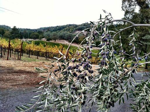Cimarossa Wines Image