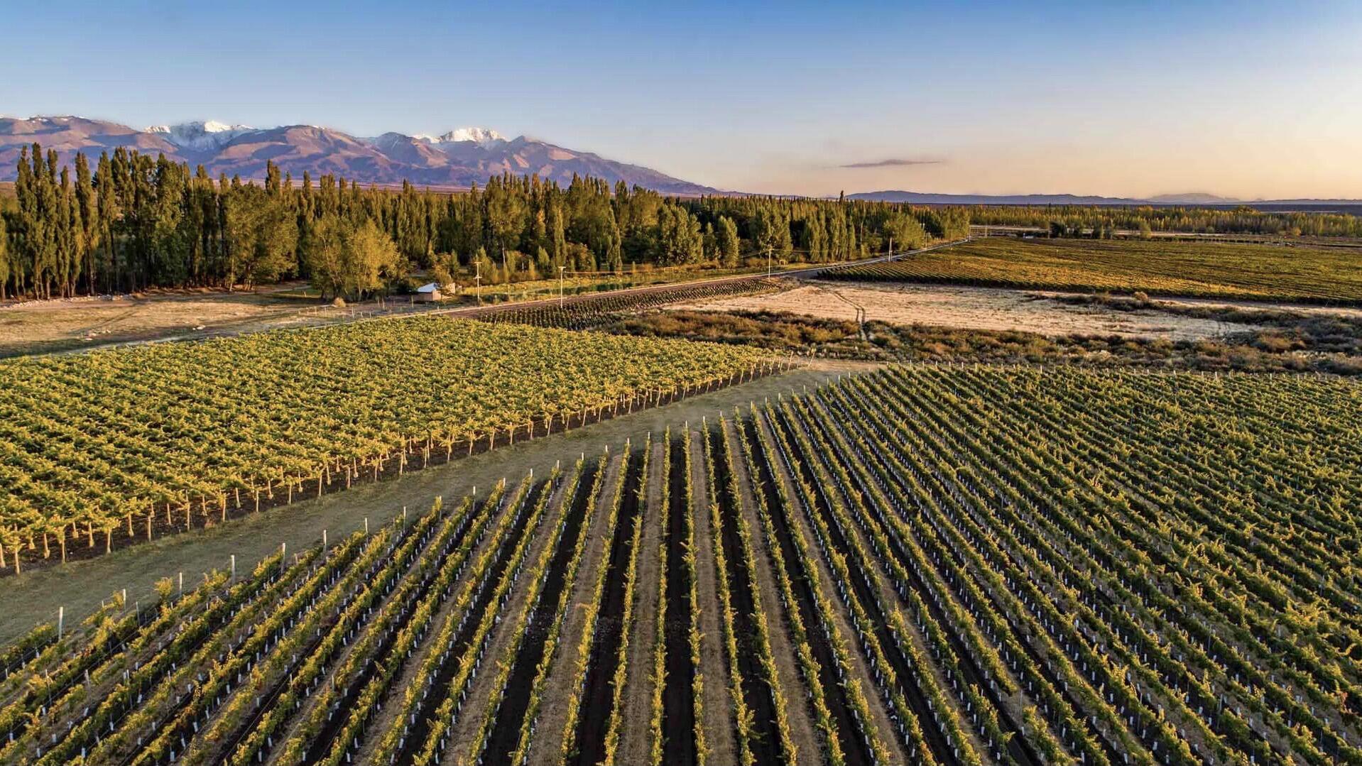 Tilia Wines Cover Image