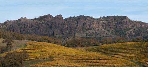 Jericho Canyon Vineyard Image