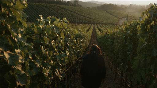 Palmaz Vineyards Image