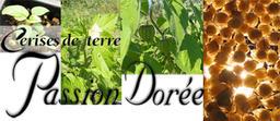 Passion Dorée Logo