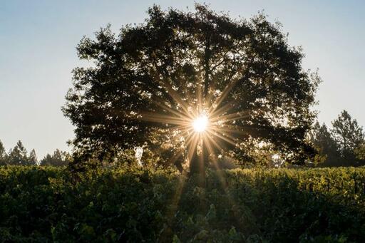 Selah Wines Image