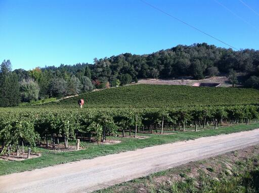 Anderson's Conn Valley Vineyards Image