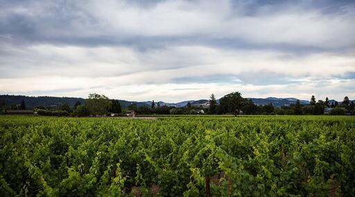 Redmon Wines Image