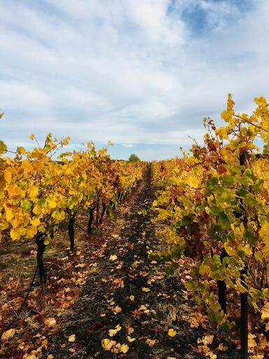 McKenzie-Mueller Vineyards & Winery Image