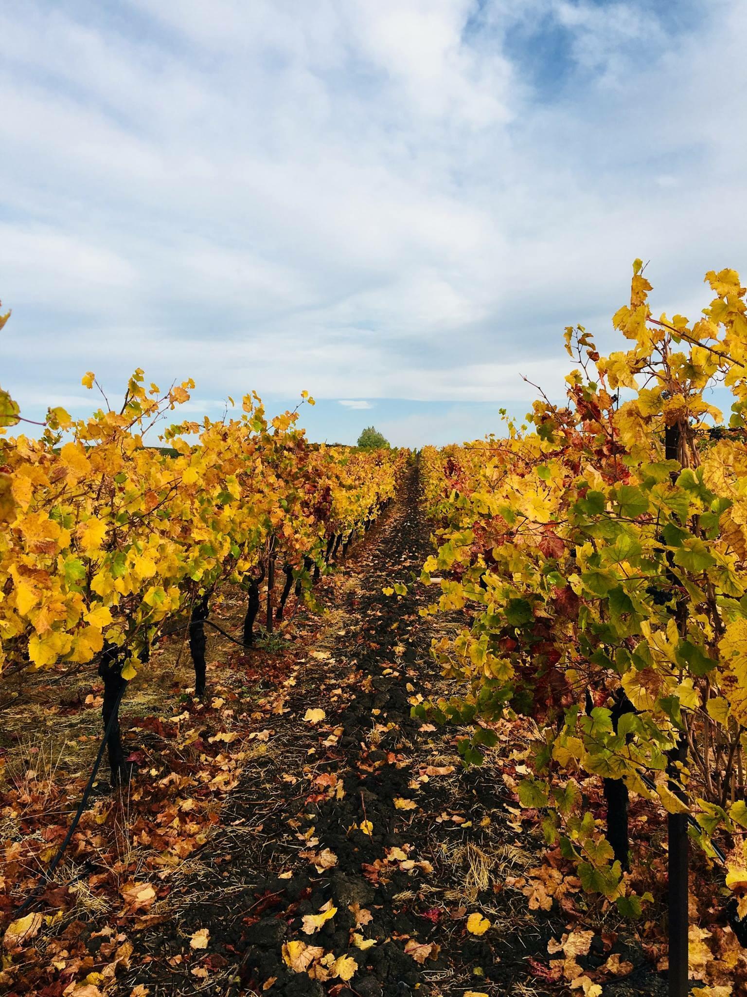 McKenzie-Mueller Vineyards & Winery Cover Image