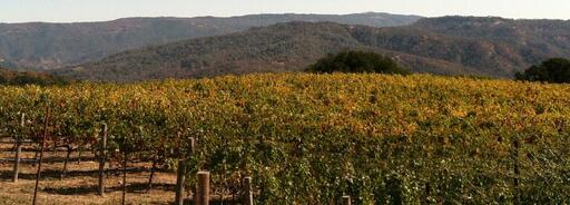 Alta Napa Valley Image