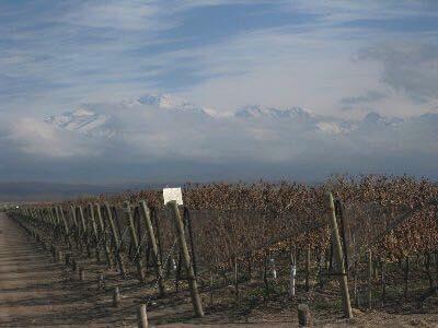 Maleva Wine Image