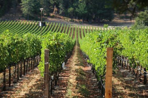 Aloft Wine Image
