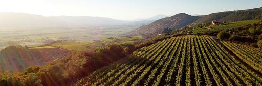 Mark Herold Wines Image