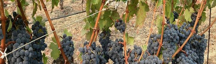Nemerever Vineyards Cover Image
