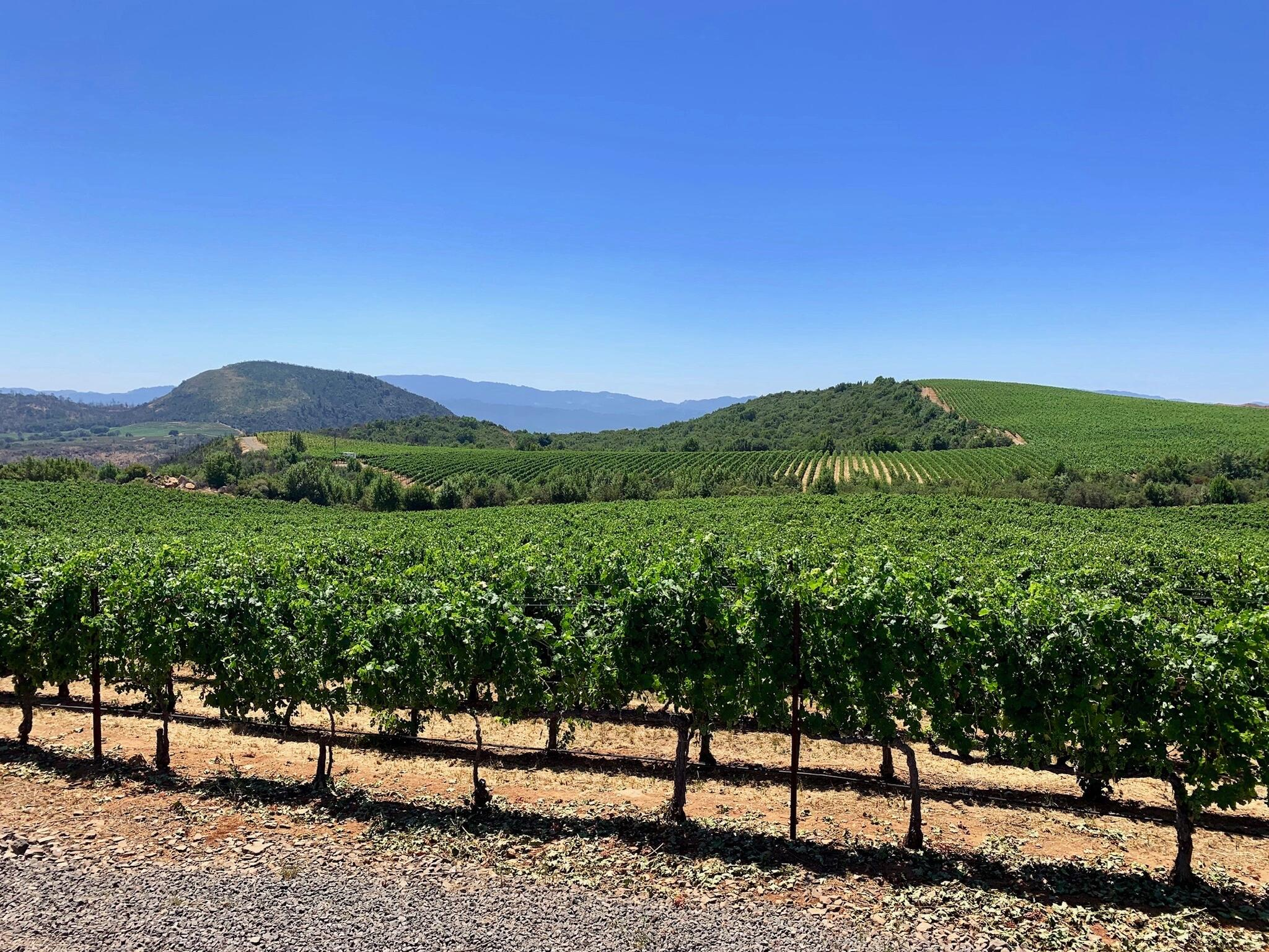 Patland Estate Vineyards Cover Image