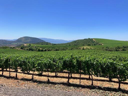 Patland Estate Vineyards Image