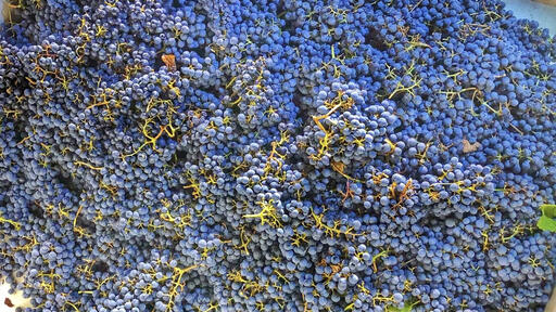 Letterhead Wines Image