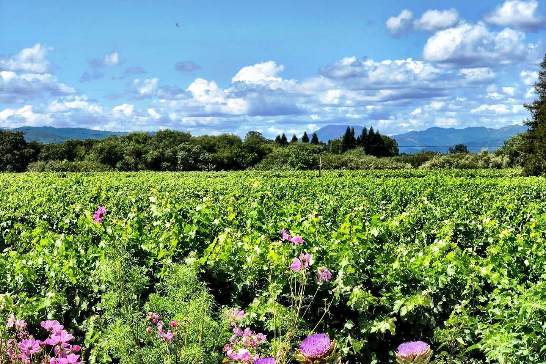 Bello Family Vineyards Cover Image