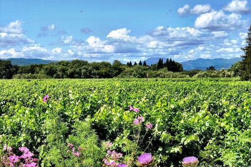Bello Family Vineyards Image